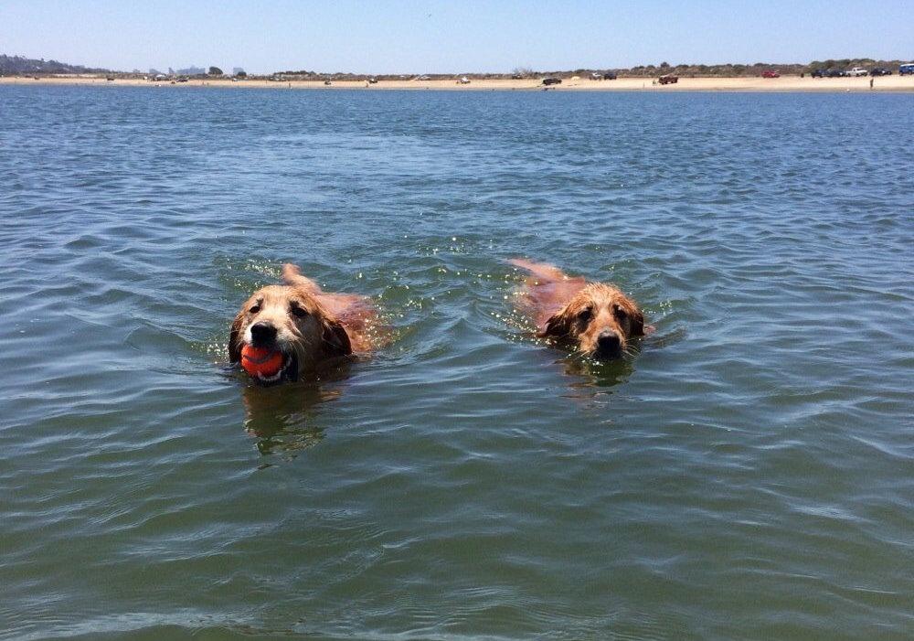 Fiesta Island dog beach San Diego