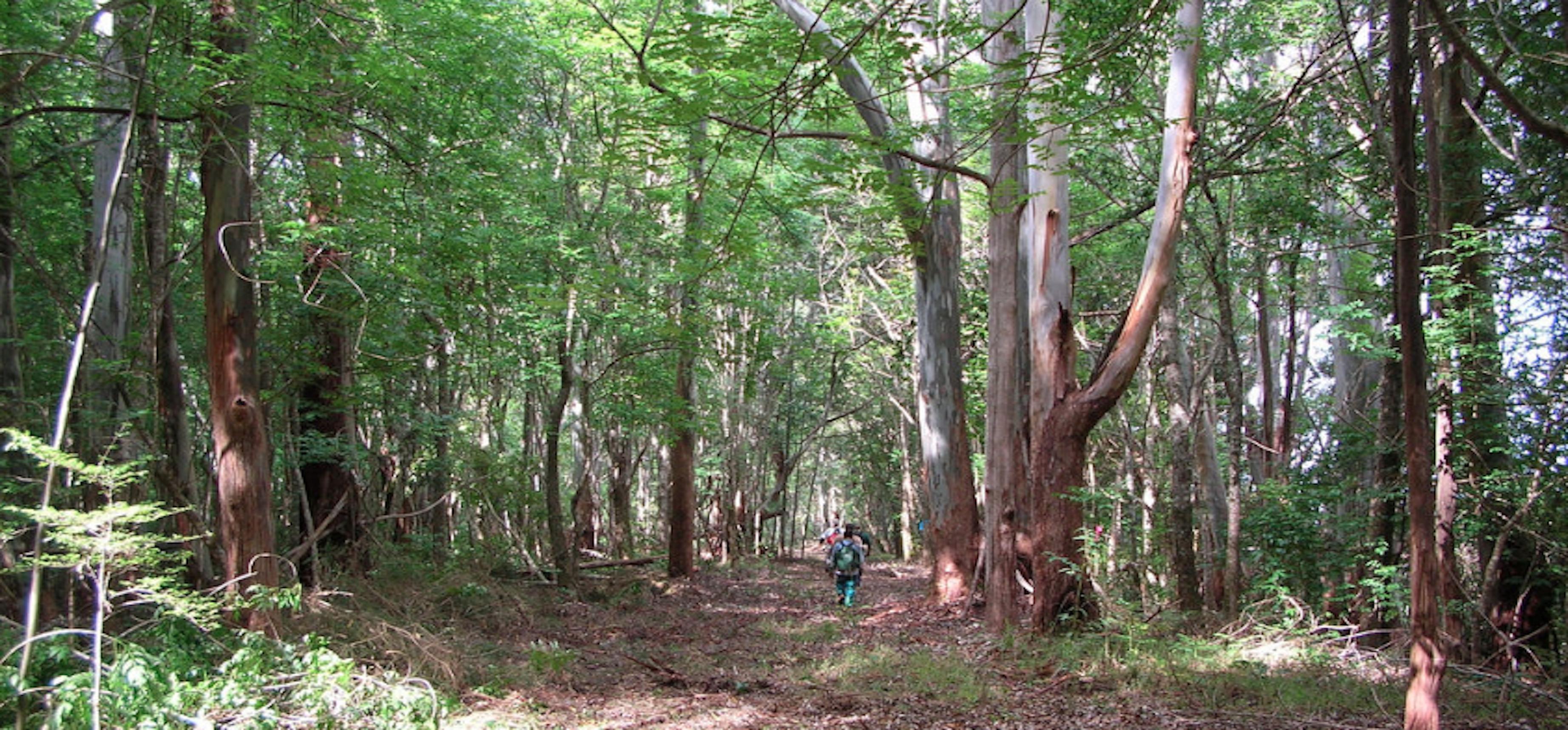 1 - Maui Forest Hiking via Flickr